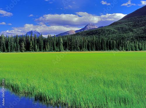 banff meadow 2