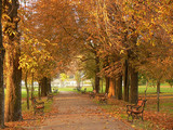 park alley with red autumn leaves poster