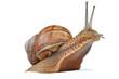 Leinwandbild Motiv snail