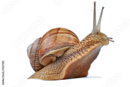 snail - 1527102