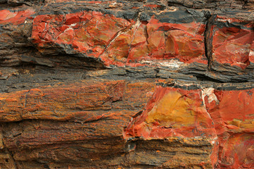 petrified wood 2