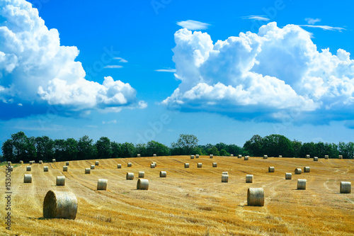 reaped field and straw rolls