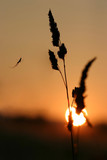 romantic sunrise with spider on the grass poster