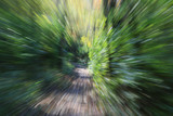zoom lens effect, forest trail poster