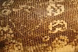 snake skin poster
