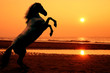 canvas print picture - rearing horse at sunset