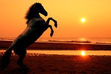 Aufzucht Pferd bei Sonnenuntergang