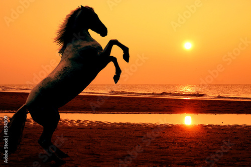 rearing horse at sunset