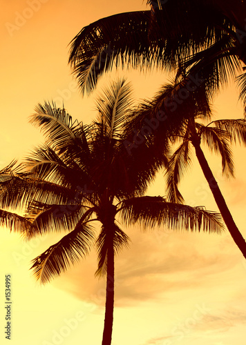 canvas print picture sunset palm (waikiki)