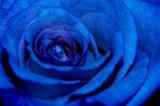 Fototapeta kwiat - niebieski - Kwiat