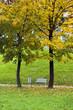 autumn park4