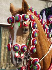 cavallo bardato 01
