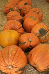 huge holiday pumpkins