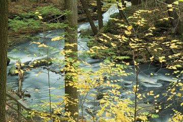 fall colored yellow leaves and flowing stream