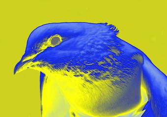 colombe psychedelique