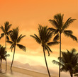 canvas print picture tropical sunset - with a tilt!