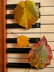 autumn leaf threesome on piano keys