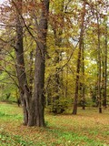 trees in an autumn foliage poster