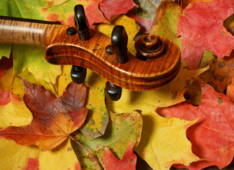 violin scroll and neck on autumn leaves