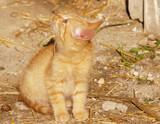 barn kitten looking up poster