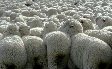 nothing but wool 4
