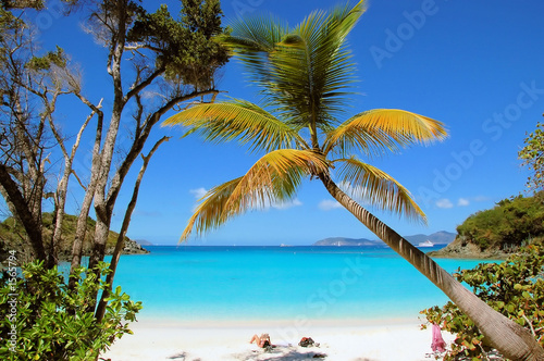 canvas print picture trunk bay