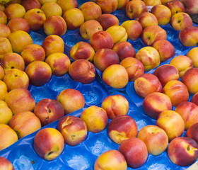 nectarines at market