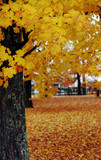 autumn scene with tree in the foreground poster