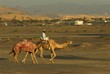 going to the camel race