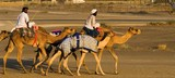 riding camels in buraimi