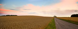 corn field in panorama view poster