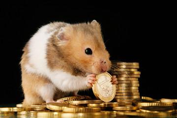 hamster knabbert an euromünzen