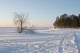 frozen coast poster