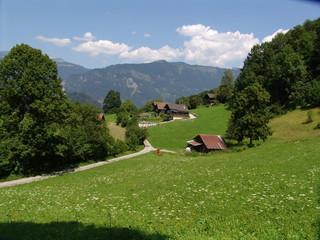 widerswil pastoral scene