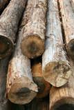 log poster