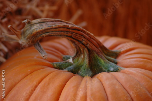 curly stem pumpkin