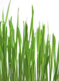 green grass, vertical format poster