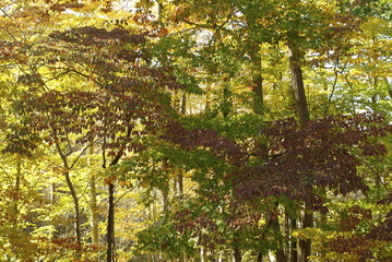 fall trees on the appalachian trail
