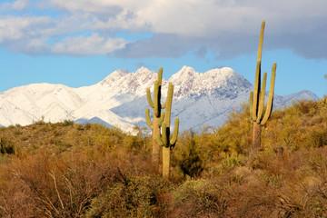 desert, saguaros and snow on the mountains.