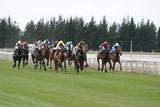 galloping race horses