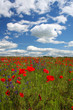 canvas print picture landscape with poppy flowers ii
