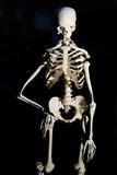 human skeleton poster