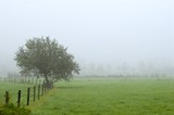 tree on foggy field