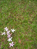 single flower cross on green grass - space for cop poster