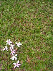 single flower cross on green grass - space for cop