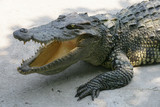 thailand crocodile poster