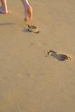 Fototapety traces dans le sable