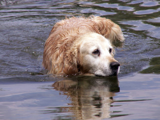 waterdog2