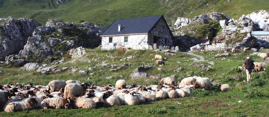 troupeau aux cabanes