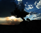 junipter tree at grand canyon sunset